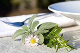 place setting with herbs
