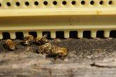 hive,beekeeping,beekeeping,bee,bees,animals