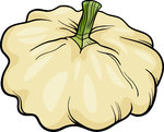 patison vegetable cartoon illustration