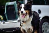 dog leashed next to transport box