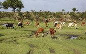 Africa. Kenia. animals in Masai Mara National Park