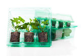plant seedlings for transport in a plastic box