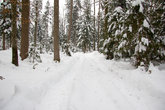 snow bike through a forest in winter during the day