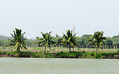 The view on the Lush coconut palm trees near to a backwater lake on a background of a blue clear sky in public park. Beautiful tropical place natural landscape background. Kerala India South Asia Pac
