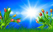 Colorful spring background with tulips and a radiant sun