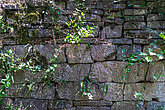 View of an old wall made by rocks and plants that grew from between the open places of the wall